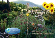 Summer Sizzle Summer Pop